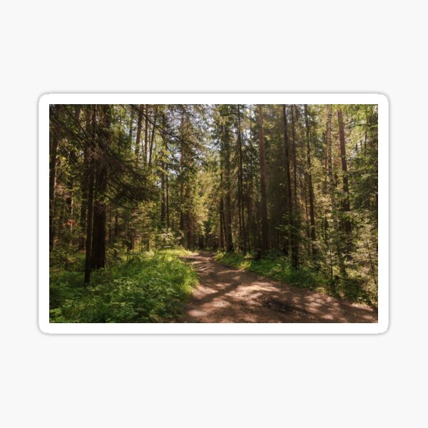 Path to the pine forest  Sticker
