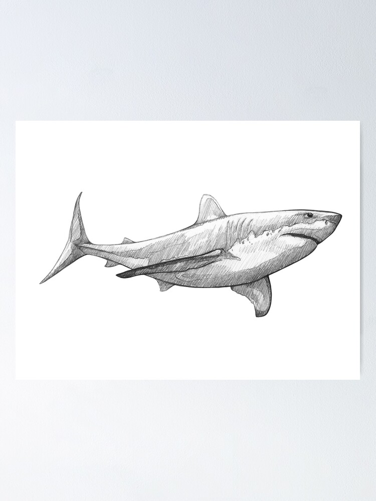 Great White Shark Art Design Pencil Sketch Poster By Madliart Redbubble