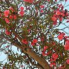 Dark Pink Flowers by eleean0r