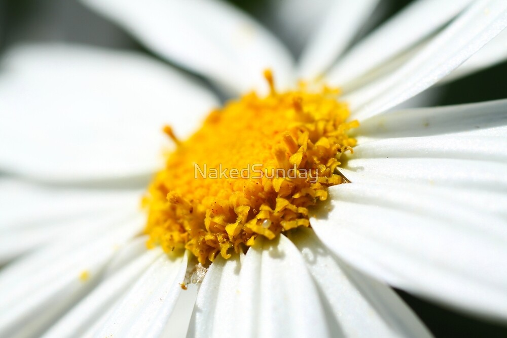 Daisy by Naked Sunday Photography & Design