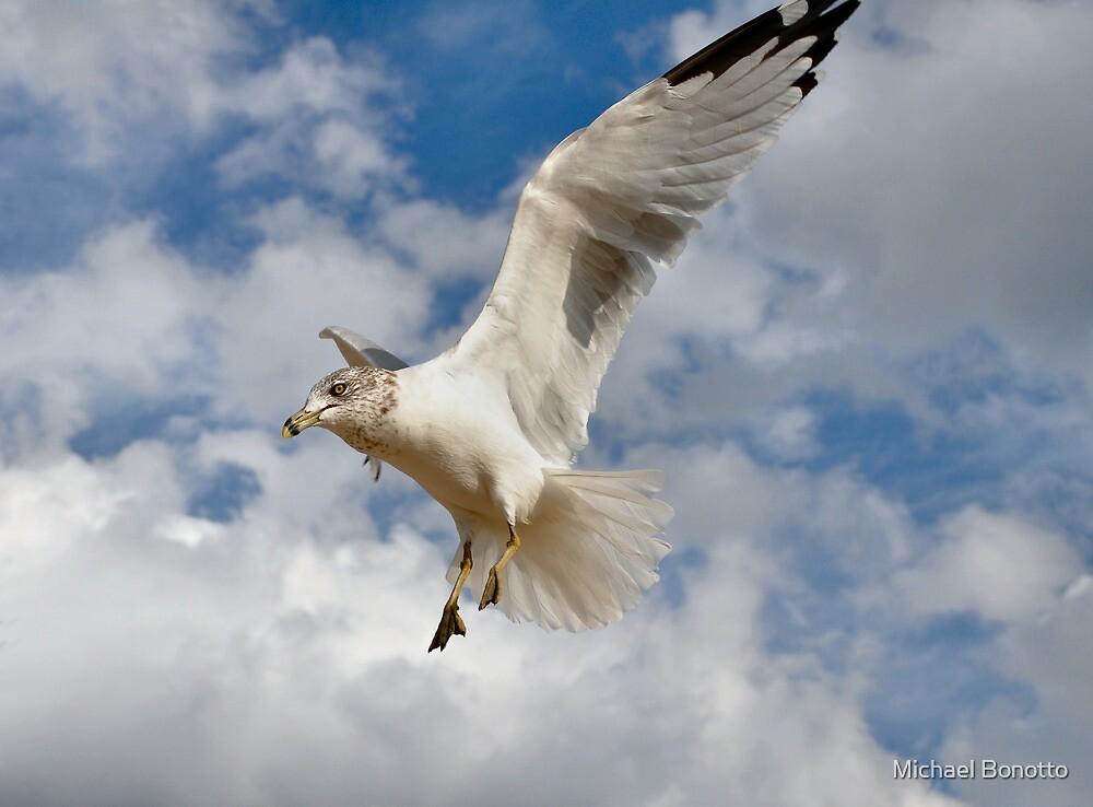 NJ gull by Michael Bonotto