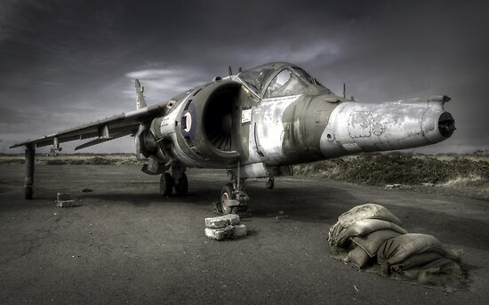 Harrier by igotmeacanon