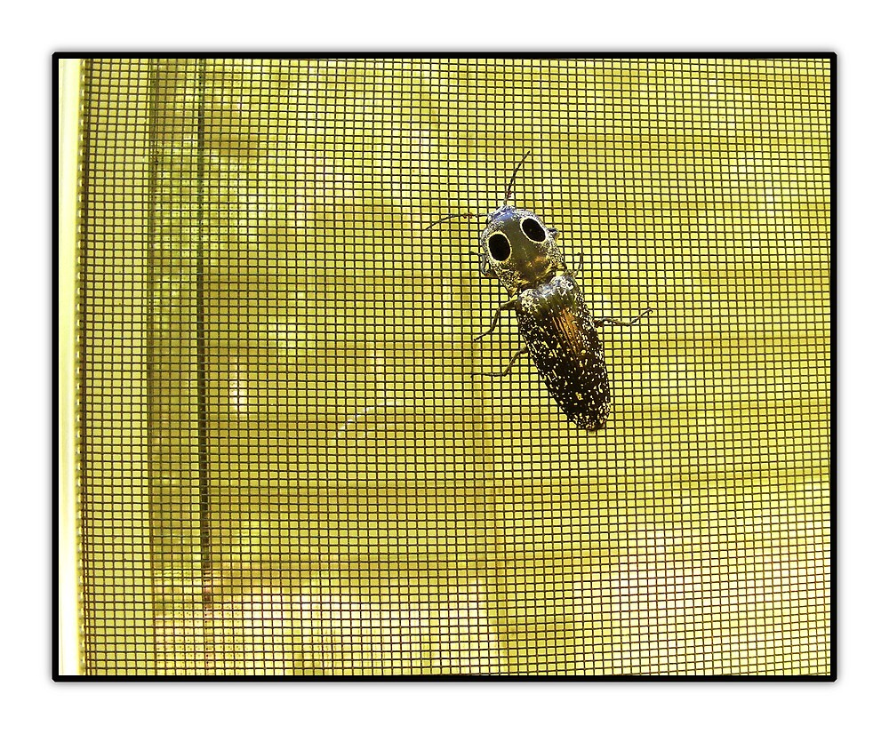Bug on Screen by Pam Clark
