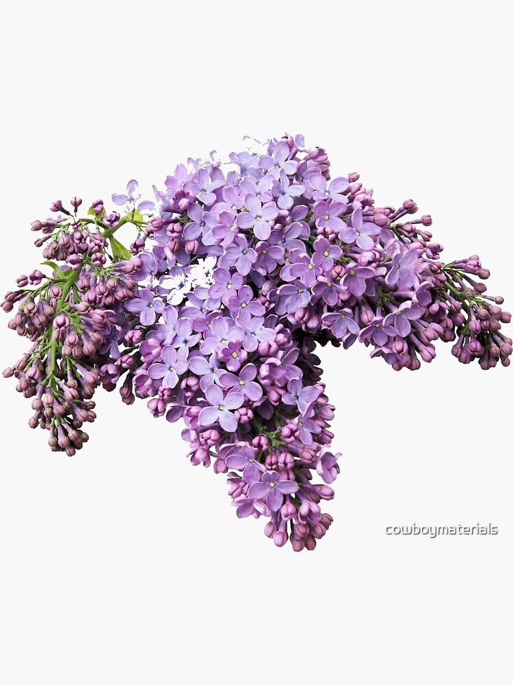 flowers 2 by cowboymaterials