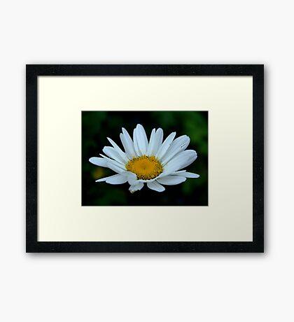 Lone Daisy Framed Print