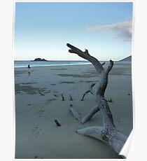 Cape Tribulation Beach Poster