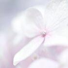 hydrangea by etoile