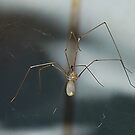 Metallic looking Spider by relayer51