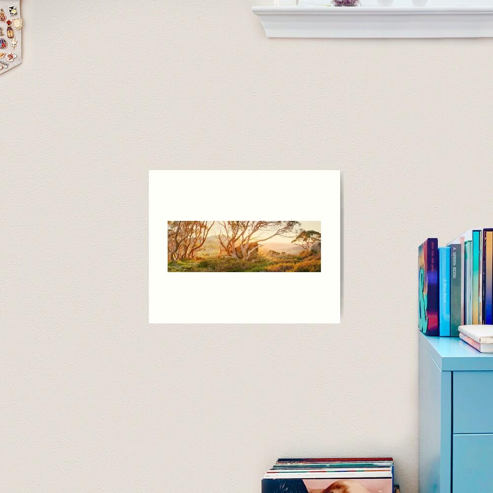 Charlotte Pass Trees, Kosciuszko, New South Wales, Australia Art Print