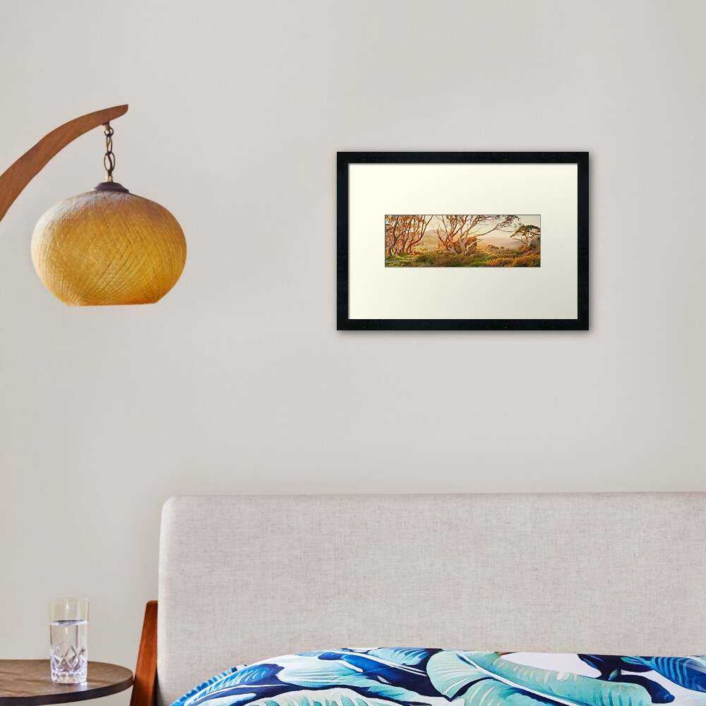 Charlotte Pass Trees, Kosciuszko, New South Wales, Australia Framed Art Print