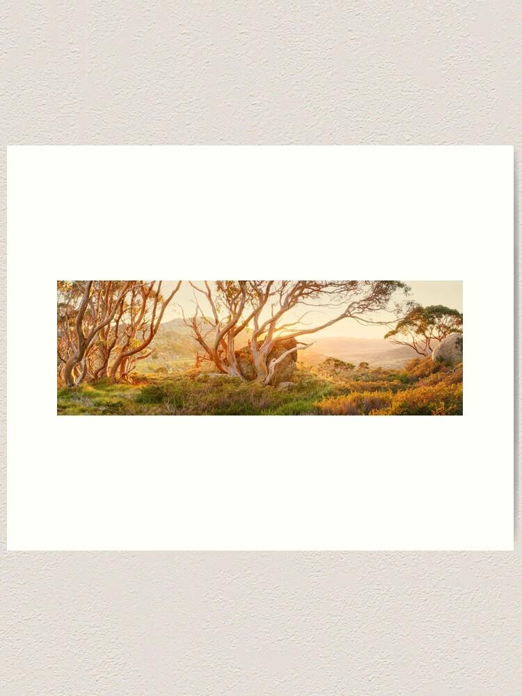 Alternate view of Charlotte Pass Trees, Kosciuszko, New South Wales, Australia Art Print