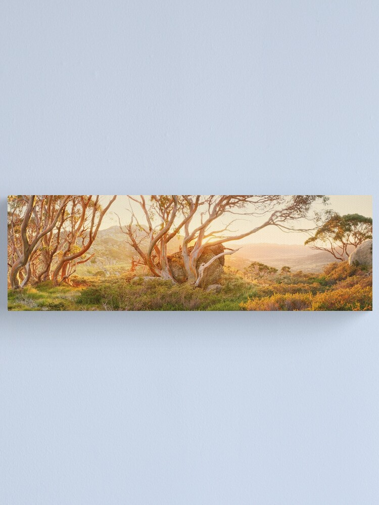 Alternate view of Charlotte Pass Trees, Kosciuszko, New South Wales, Australia Canvas Print