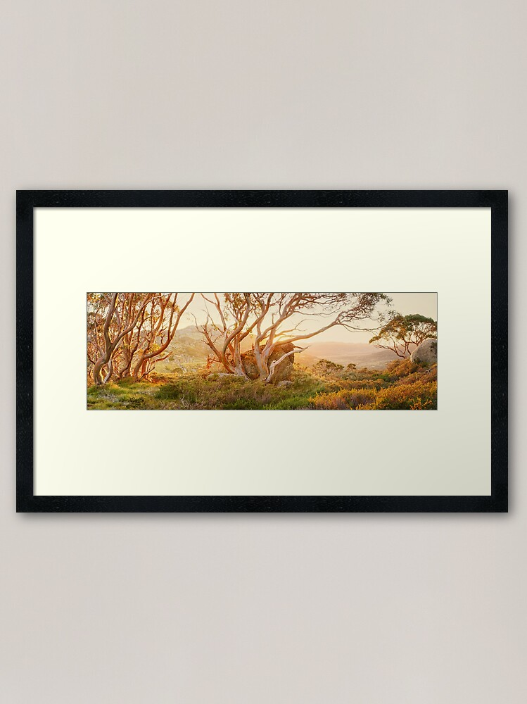 Alternate view of Charlotte Pass Trees, Kosciuszko, New South Wales, Australia Framed Art Print