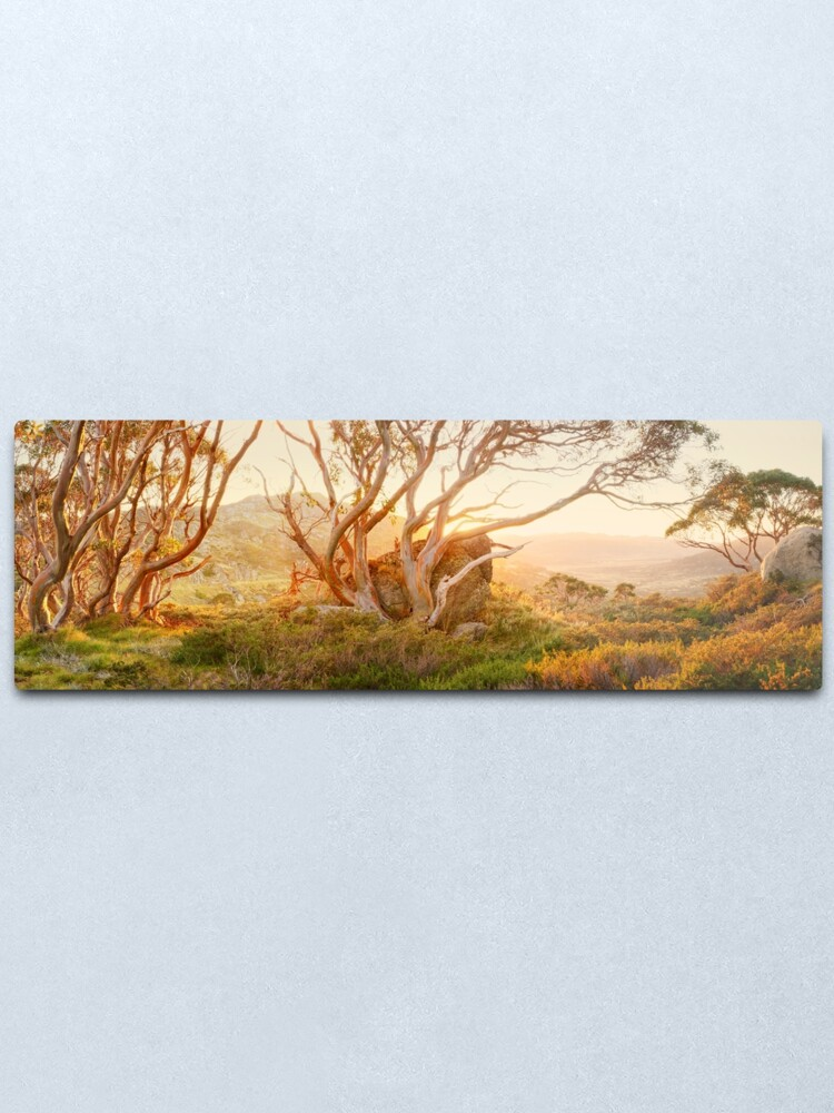 Alternate view of Charlotte Pass Trees, Kosciuszko, New South Wales, Australia Metal Print