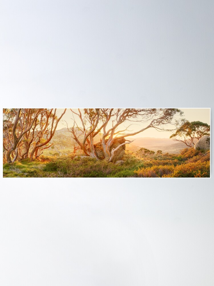 Alternate view of Charlotte Pass Trees, Kosciuszko, New South Wales, Australia Poster
