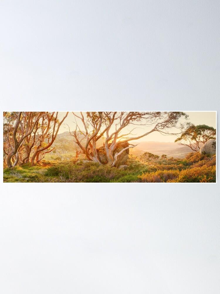 Alternate view of Charlotte Pass Trees, Kosciuszko, New South Wales, Australia Poster