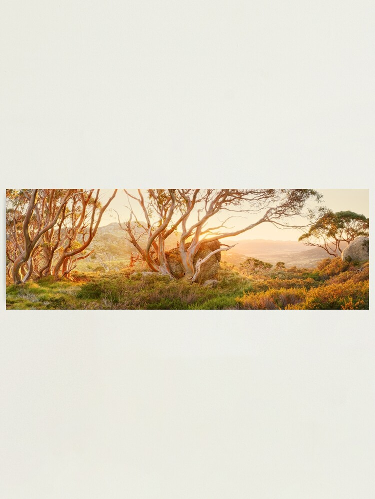 Alternate view of Charlotte Pass Trees, Kosciuszko, New South Wales, Australia Photographic Print