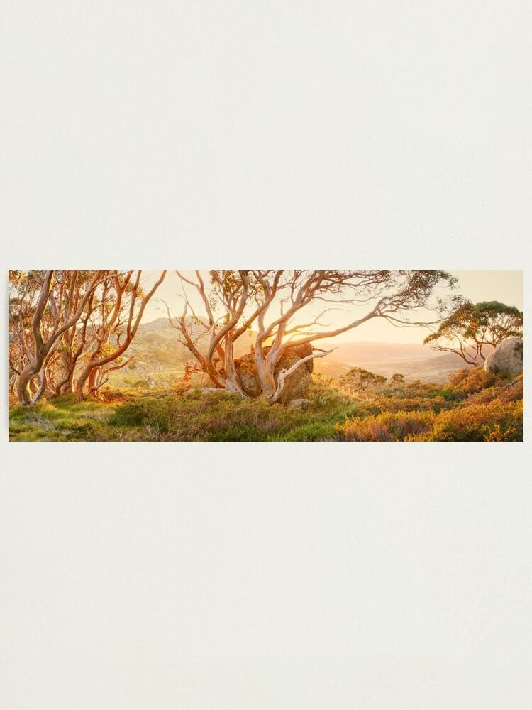 Alternate view of Charlotte Pass Trees, Kosciuszko, New South Wales, Australia Photographic Print