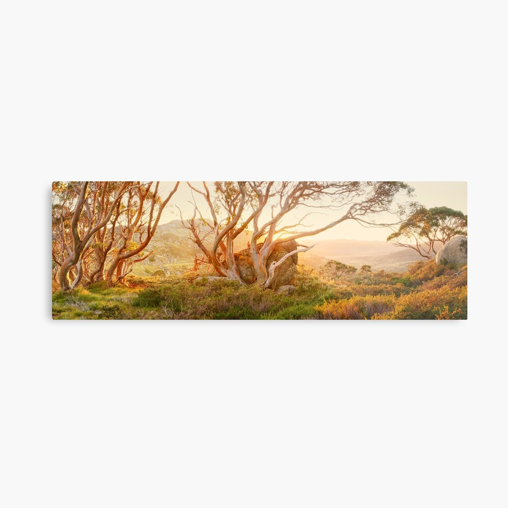 Charlotte Pass Trees, Kosciuszko, New South Wales, Australia Metal Print