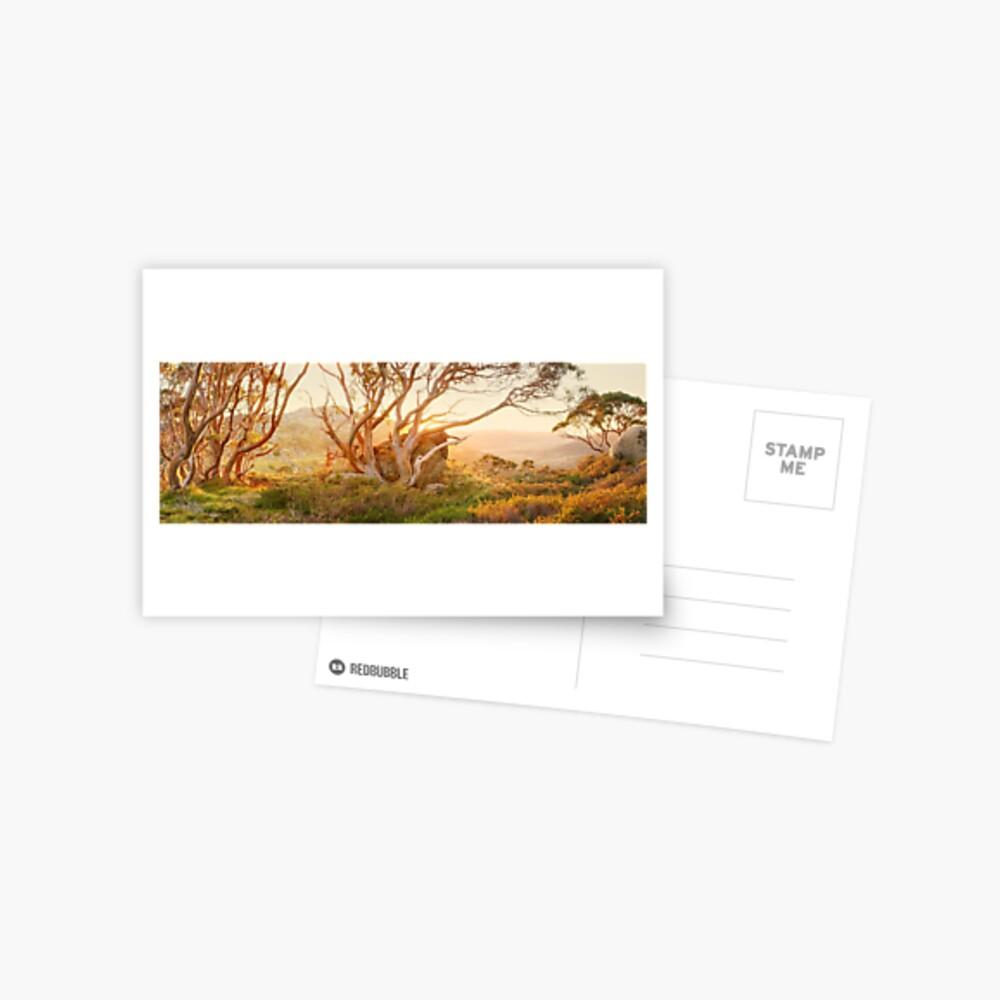 Charlotte Pass Trees, Kosciuszko, New South Wales, Australia Postcard