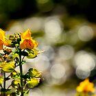 Seep Monkey Flower by Barbara  Brown