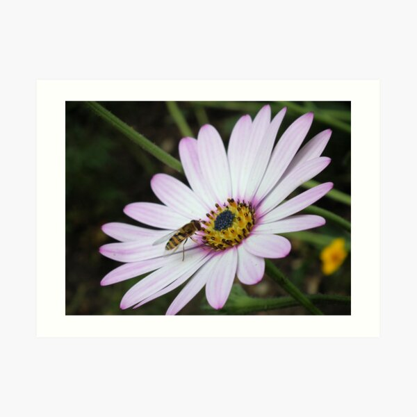 Bee collecting pollen from flower 2 Art Print