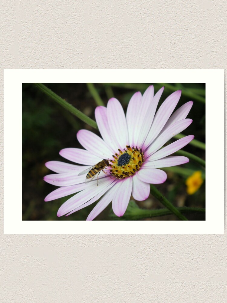 Alternate view of Bee collecting pollen from flower 2 Art Print