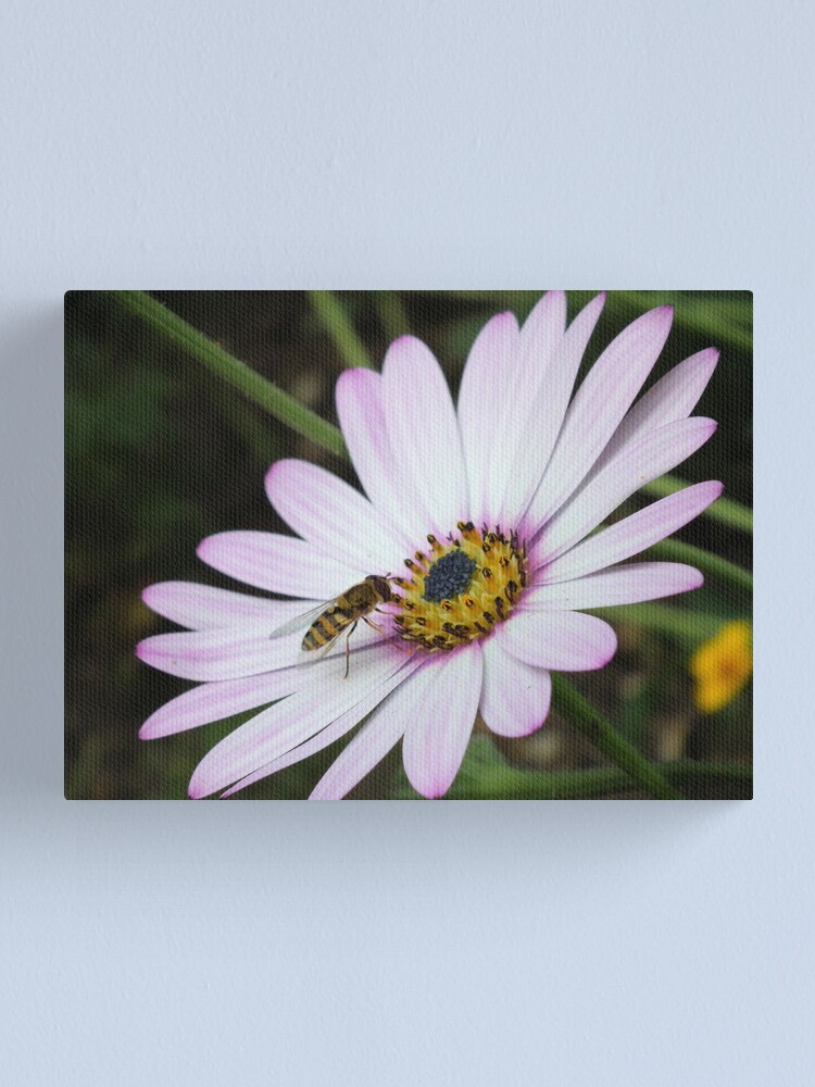 Alternate view of Bee collecting pollen from flower 2 Canvas Print