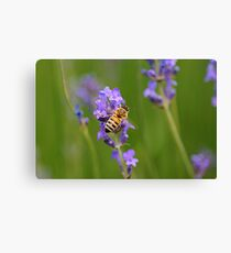 Lavender&bee Canvas Print