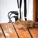 Squirrel!!!! by Fanboy30