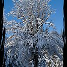 A Snowy Tree in Winter by Jessica Smith