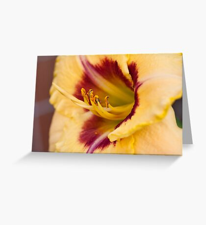 The next Daylily Greeting Card