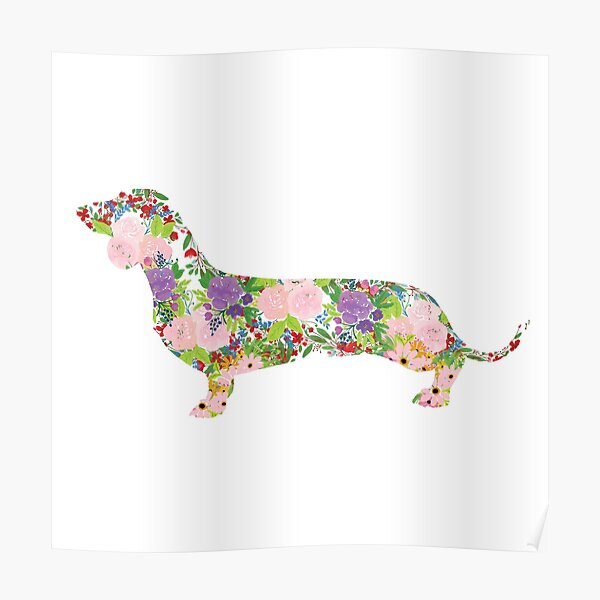 Floral Dachshund Poster