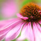 Purple Coneflower by Michael  Dreese