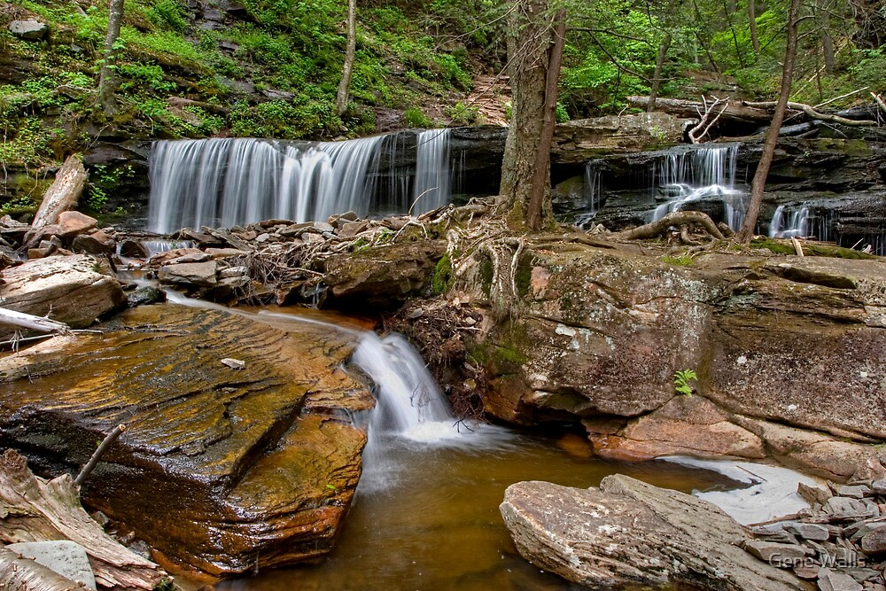 Delaware Falls In Ganoga Glen by Gene Walls