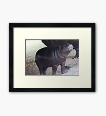 Smile - pygmy hippo baby with infectious grin Framed Print