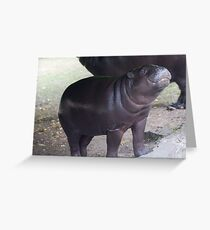 Smile - pygmy hippo baby with infectious grin Greeting Card