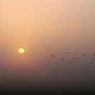 Birds at Dawn by Hans Kool