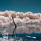 Candy Floss Lake by Rob Smith