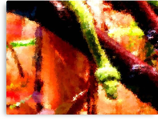Boa Abstract by Veronica Schultz