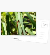 Red Dragonfly Postcards