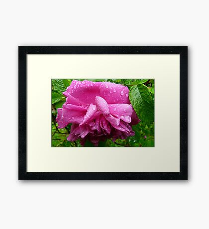 After The Rain Shower Framed Print