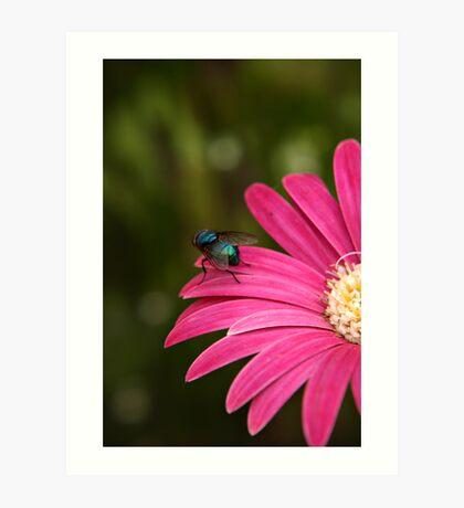 Blue Fly Art Print