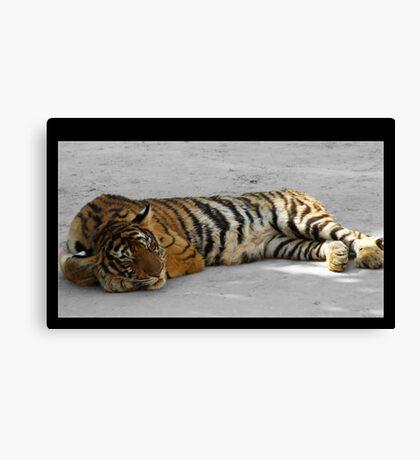 Sleeping Cat - Thailand Tiger Temple Canvas Print