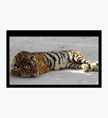 Sleeping Cat - Thailand Tiger Temple Photographic Print
