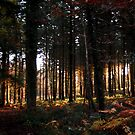 Forest of Dean in Fall by Sophia Grace