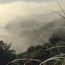 Mist over Opua, New Zealand. by Roy  Massicks