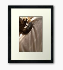 the brown blanket © 2010 patricia vannucci Framed Print