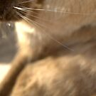 whiskers  © 2010 patricia vannucci  by PERUGINA