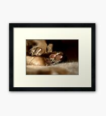 paws & claws © 2010 patricia vannucci  Framed Print